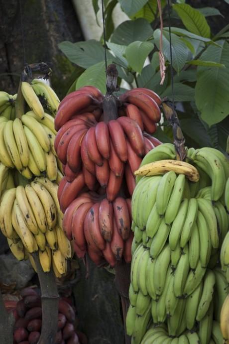 banana-770347_960_720