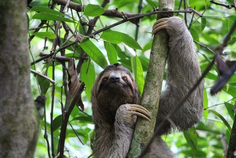 sloth-2759724_960_720